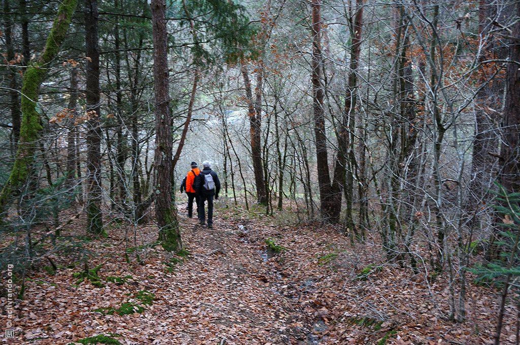 Groupe marchant dans la forêt